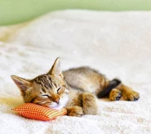 Продвижение магазина постельного белья и подушек